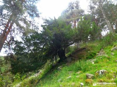 Tejos Rascafría-Valhondillo o Barondillo;las chorreras gredos parque natural de redes rutas ermita